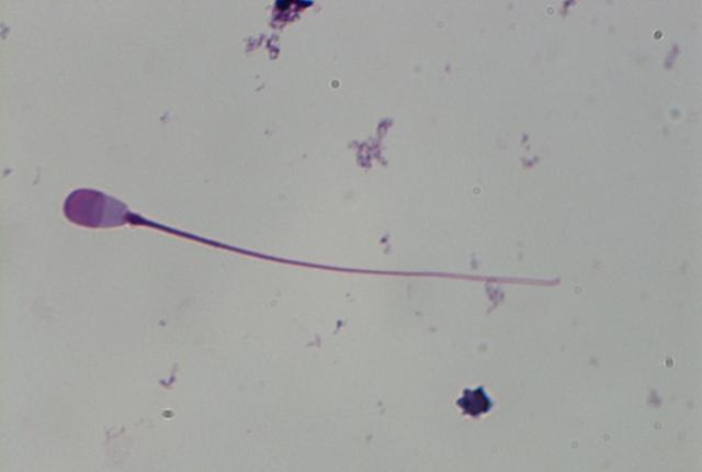 Bactrian Wapiti 6
