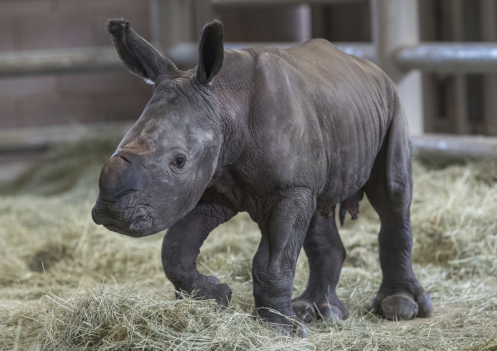 San Diego Zoo Global Announces Historic Birth of Southern