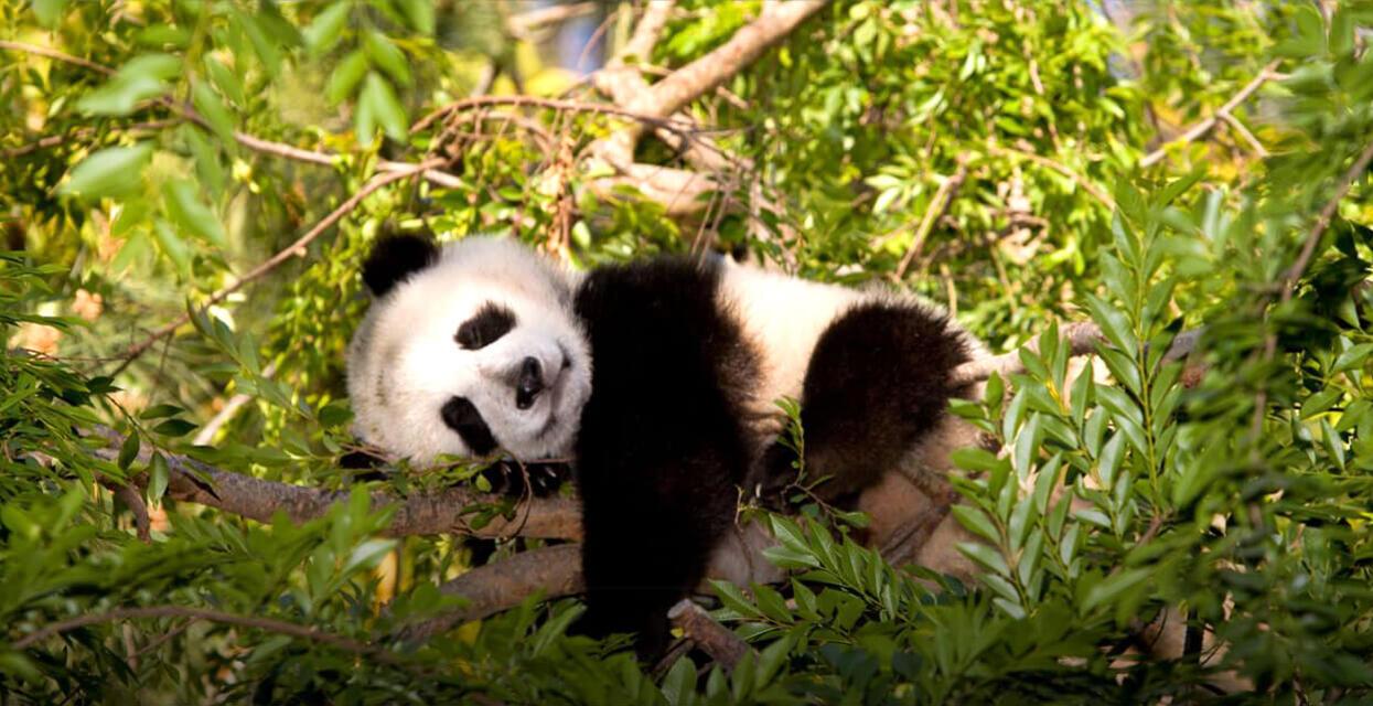 Conservation of Plant and Animals Free Quiz | Edusaint