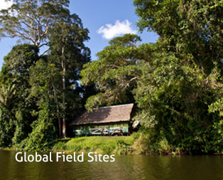 Global Field Sites