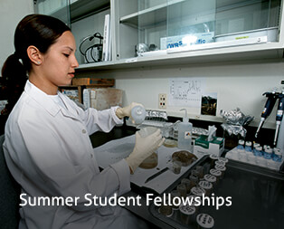 Summer Student Fellowships