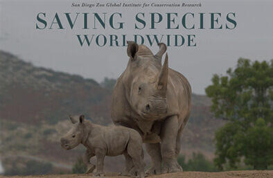 Rhino mom and calf. Saving Species worldwide.