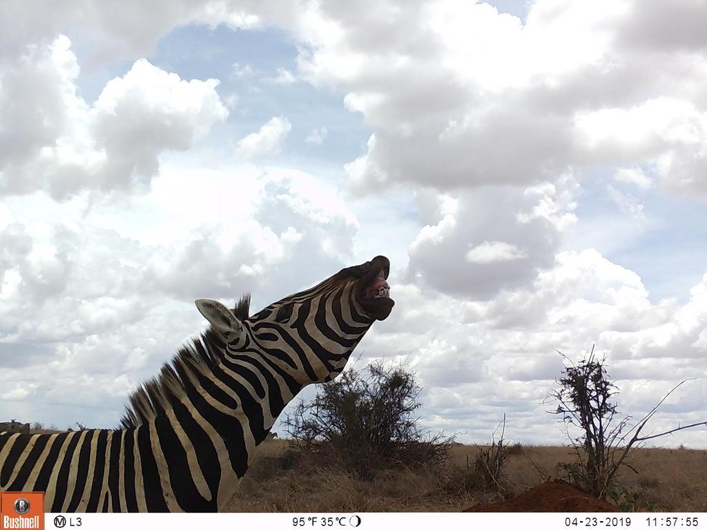 Zebra-yyyy!
