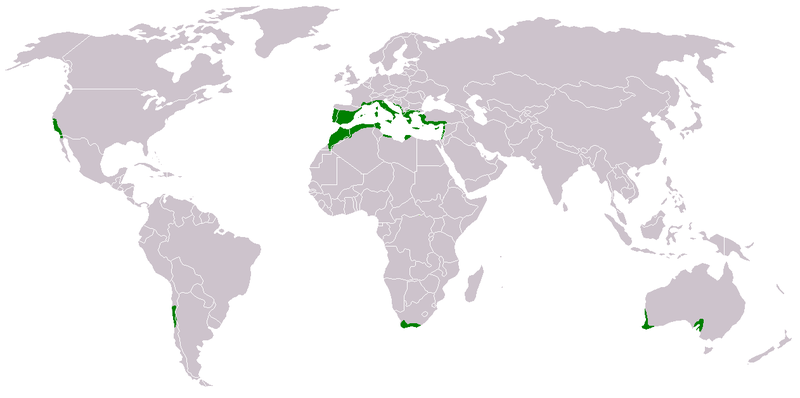 This map shows the different regions that have Mediterranean climates around the world. Notice that they occur on the same latitudes worldwide.