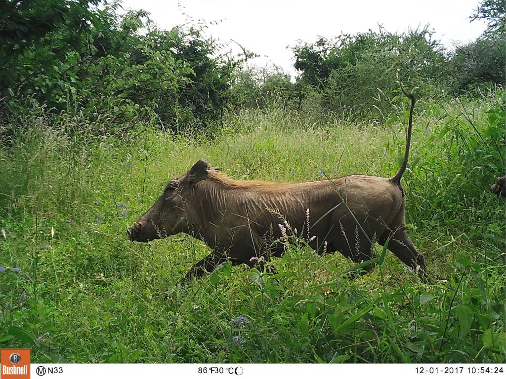 Warthog on the move!