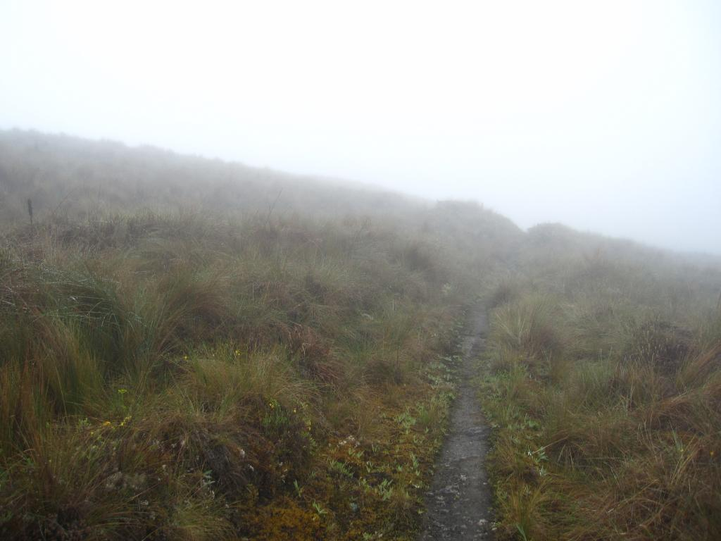 Dense fog, clouds, and rain are common in the Manu landscape and there are few human trails like this, so GPS units are valuable tools.