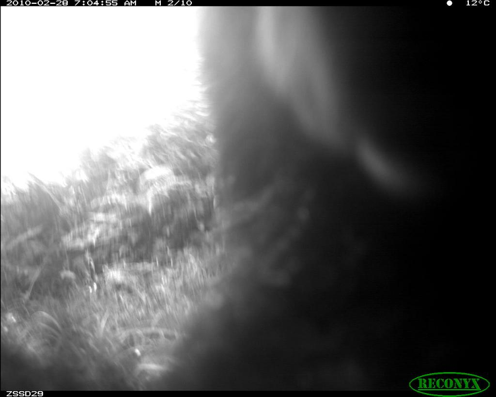 Taken on 28 February 2010 by a camera trap in SE Peru. Sometimes the camera trap photos show some interest by the bear, too.