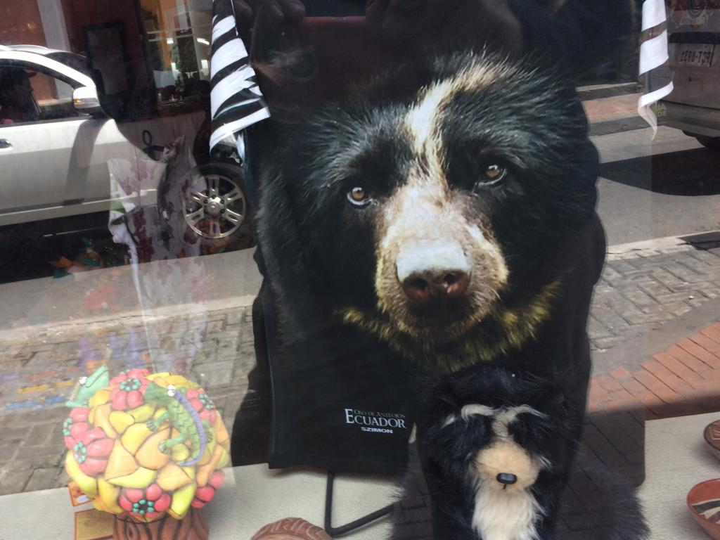 Retail stores in Quito were selling merchandise that represented Andean bears, not just giant pandas and polar bears! Photo by the author.