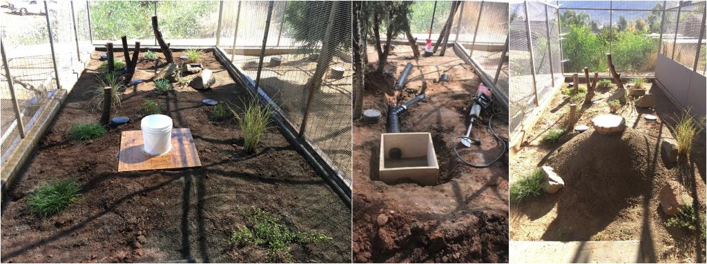 The plants are all in (left), the burrow and tunnels before covering with dirt (middle), the finished burrow (right). Photos by Andrew Stehly.