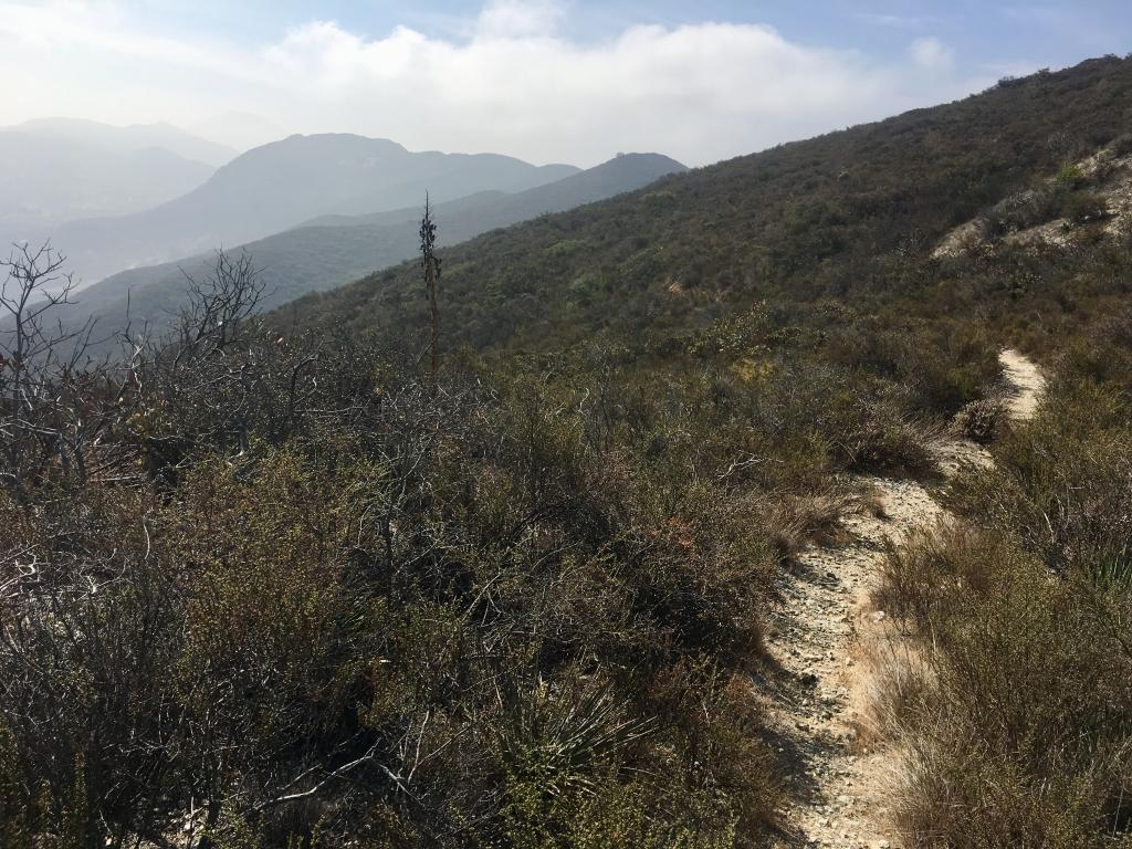 The Tick-Highway – there are populations of both San Miguel savory and Parry's tetracoccus along this trail and we've been traveling it frequently this year.