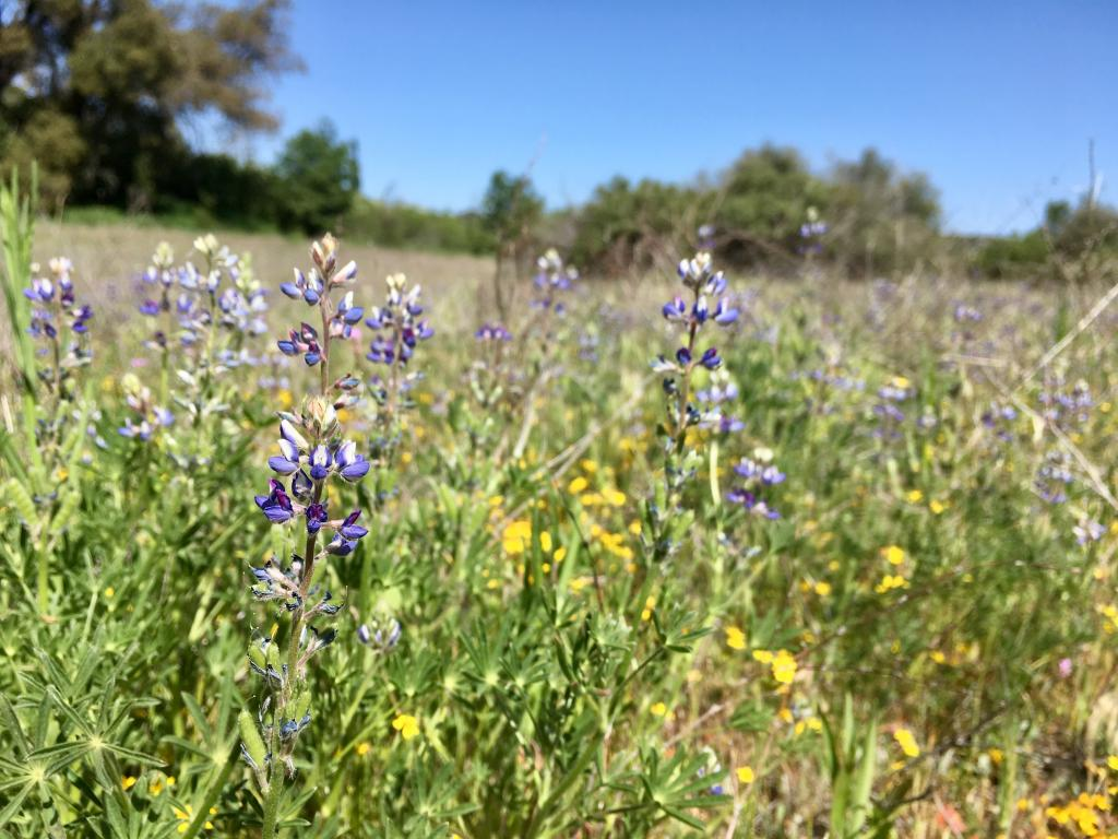 With cooler temperatures and more moisture, meadows in our mountains had beautiful displays of wildflowers, even though very few annuals bloomed at the lower elevations.