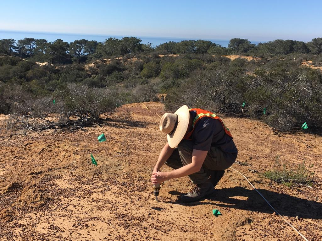 Small holes were drilled into the sandstone, and we marked each planting location with a small pit tag so we could relocate it when we returned bi-weekly to monitor.