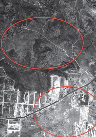 Though difficult to see, the light colored, circular shaped spots on this historic 1928 photo are vernal pools. Large areas of pools once existed on the flat tops of mesas and plateaus throughout the county. These particular pools have all been destroyed to build San Diego State University and for housing.
