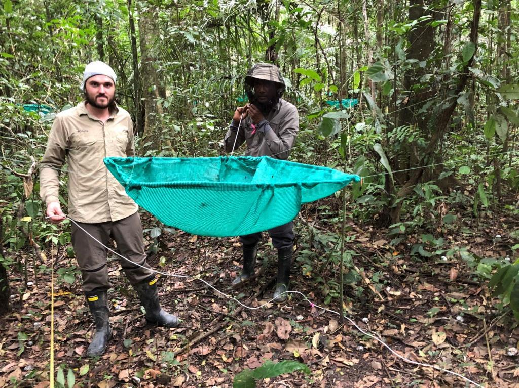 "A good example of ""legacy data"" from Cocha Cashu, researchers continue data collection on tree seedling dispersal, competition and growth begun a generation ago."