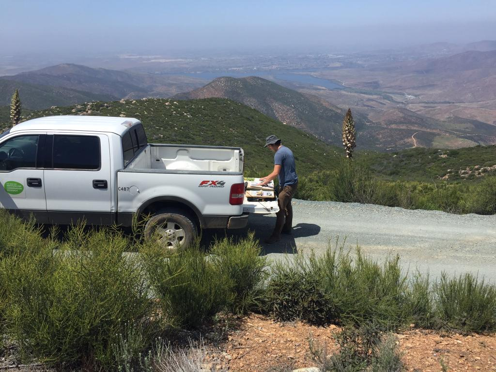 Many locations, such as the higher elevations of Otay Mountain, contain large populations of plants found nowhere else on the planet.