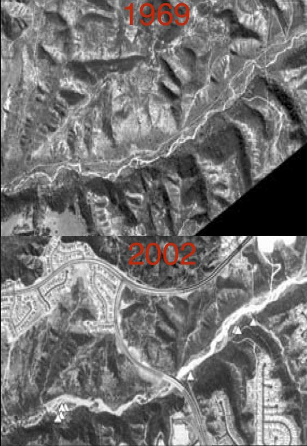 Though the quality of these aerial photos is poor, it clearly shows how the urbanization of the mesa tops has changed our canyon bottoms. Water cannot be absorbed through our concrete and asphalt, and much more water is funneled down our canyons, eroding away much of the monardella habitat.