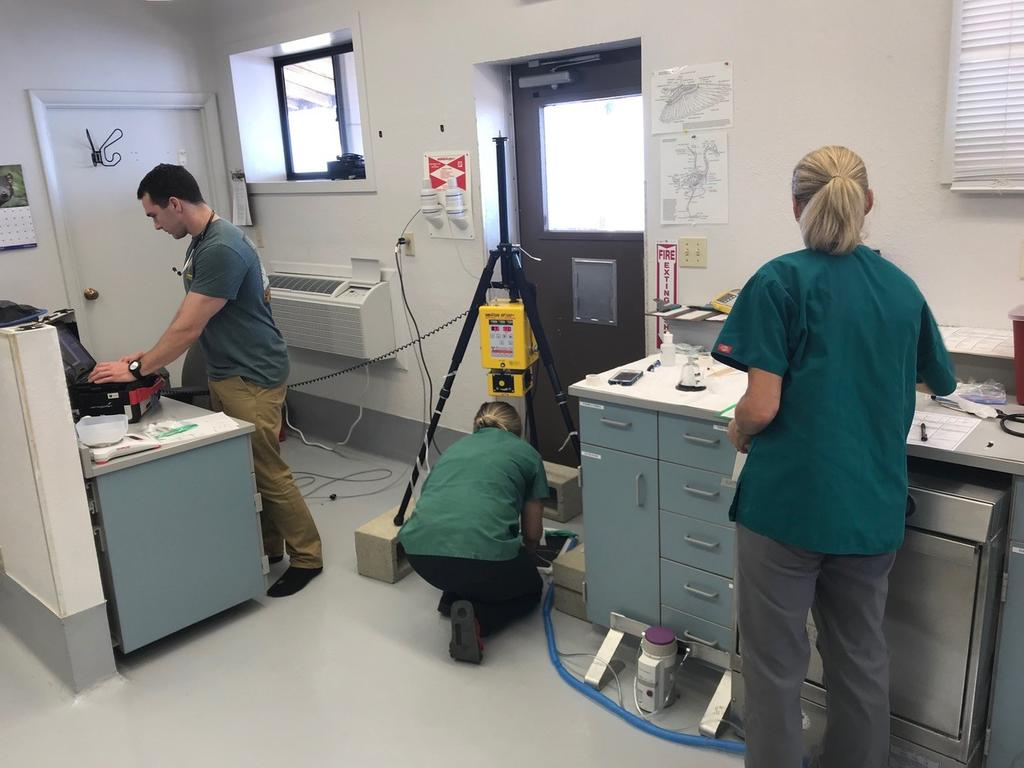 The set up at our facility for the radiographs and Zoo Hospital staff in action.