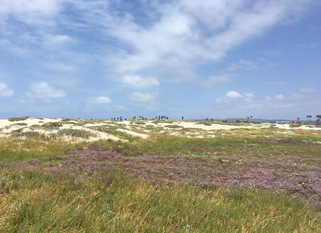 From our beach dunes to our high elevation mountains, San Diego is home to hundreds of rare species that need our help. We are proud to be conserving these ecosystems and helping to end extinction in this beautiful county.