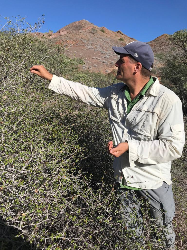 Jon Rebman collecting seeds on Cerralvo Island.