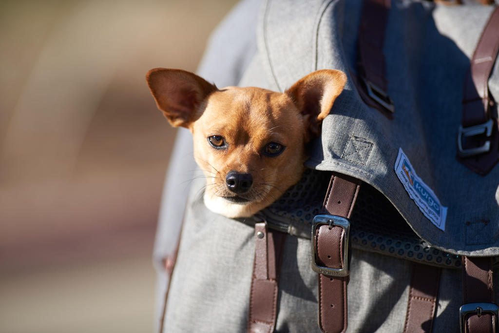 Bighetti is small and portable and travels well in a backpack.