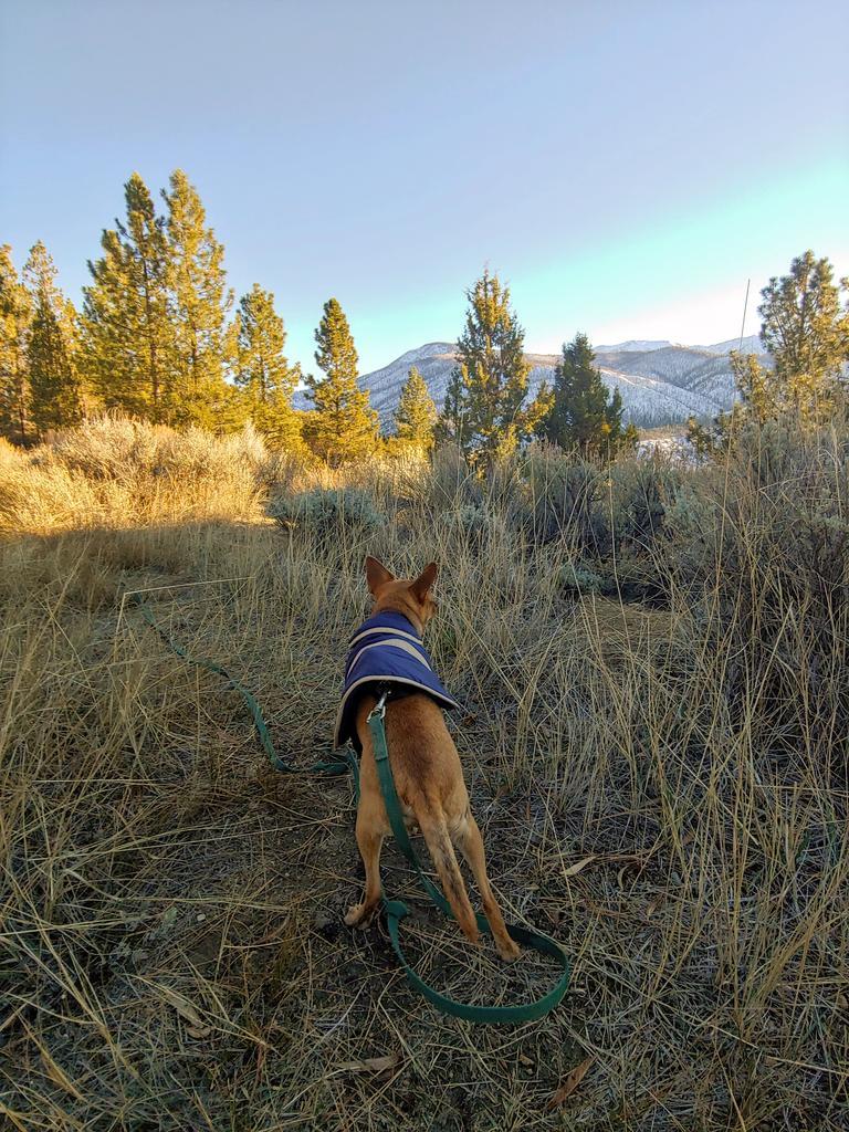 Bighetti on a post-reintroduction survey in the mountains.