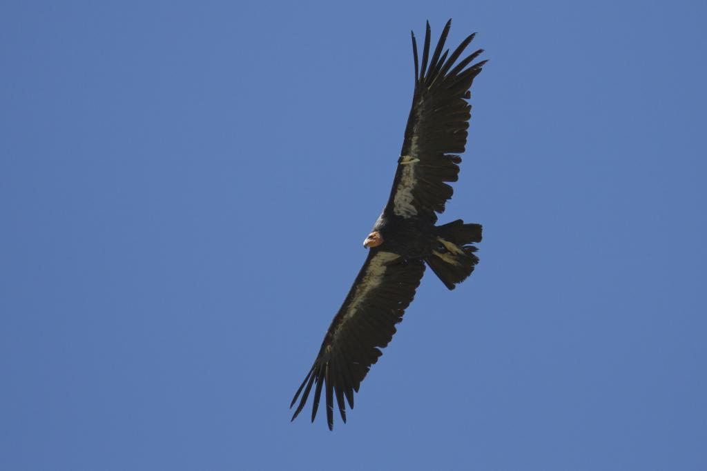 Seeing condors gracefully soaring over the mountains was magical.