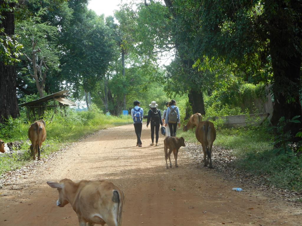 Members of our Cambodia social science research team travelling to a typical Khmer village to conduct interviews about bear part use (picture: Thona Lim, SDZG & FTB).