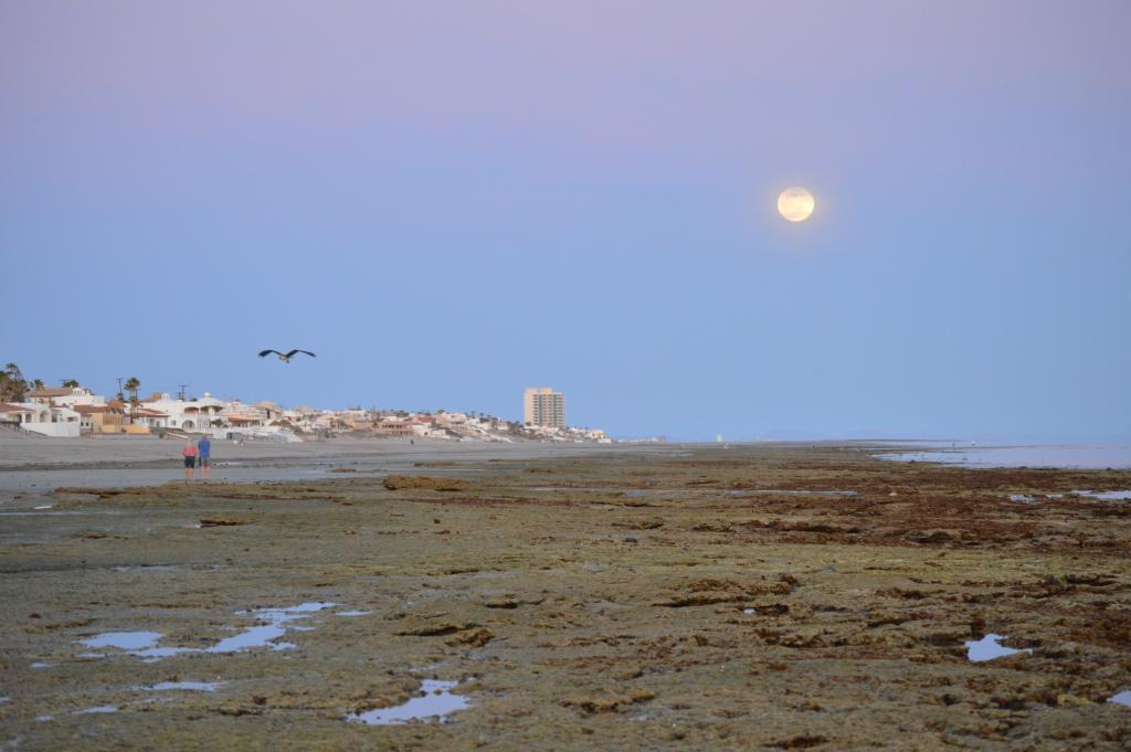 Puerto Penasco at sunset, in front of CEDO's field station. Photo by Angela Kemsley.