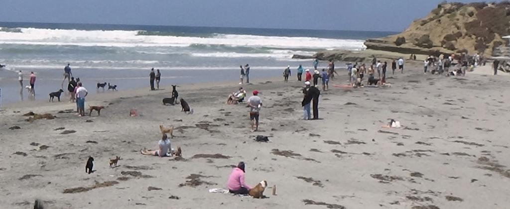 Pooch paradise at Del Mar Dog Beach in San Diego County (Photo: Gabriela Ibarguchi)