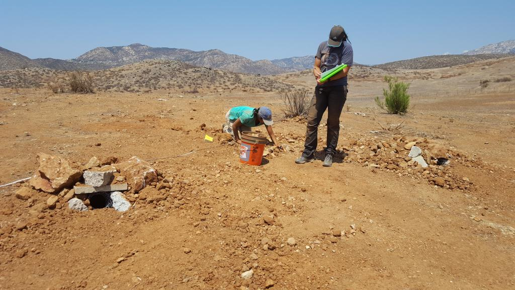 Figure 2. Both entrances of a brand new artificial burrow. The author and Kira Marshall are taking measurements of burrow depth.