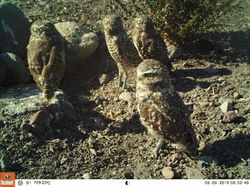 Figure 6. Who was born this year? From left to right: juvenile, juvenile, adult male (front), and adult female (back).
