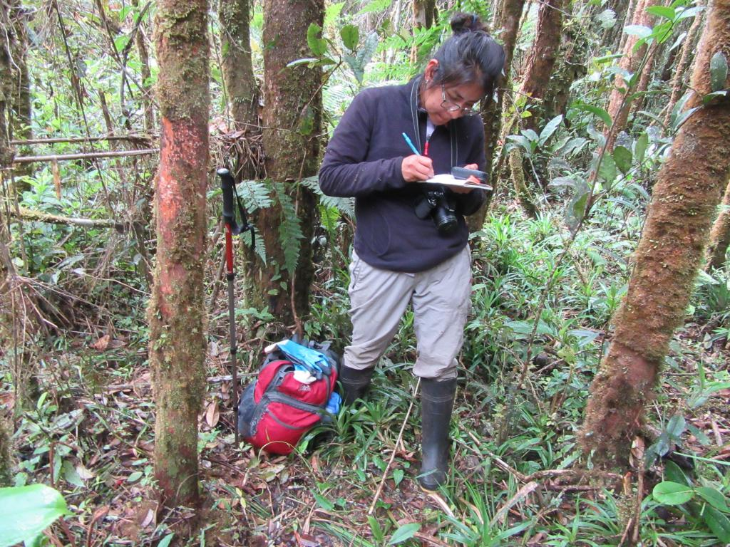 Denisse Mateo collecting data on Peruvian Andean bear marking on a tree. Photo taken on 27 August 2018, courtesy of Russ Van Horn.