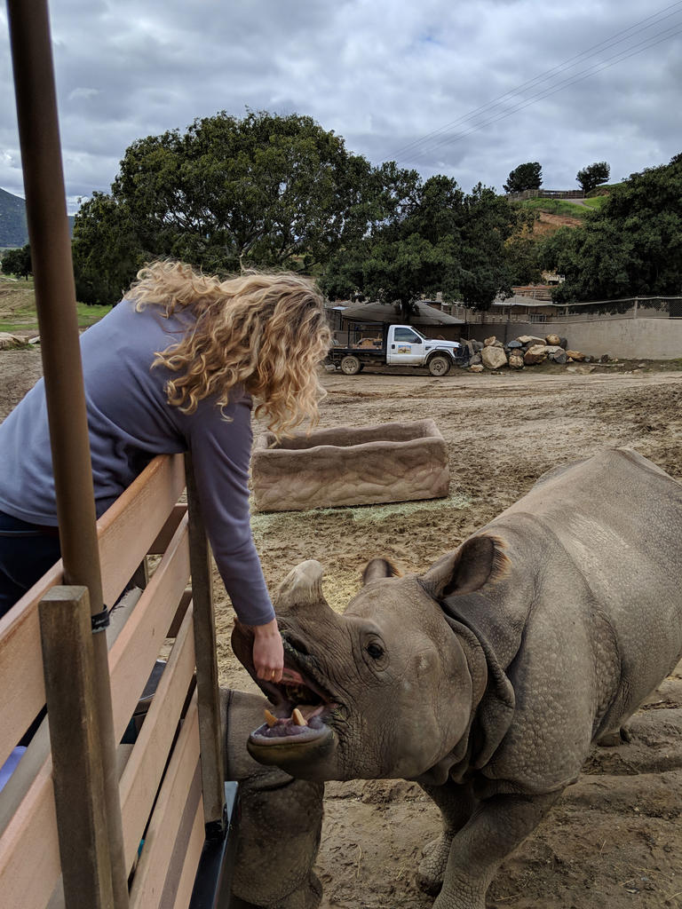 Feeding Greater One Horned Rhinos while on a Caravan Safari at the Park.