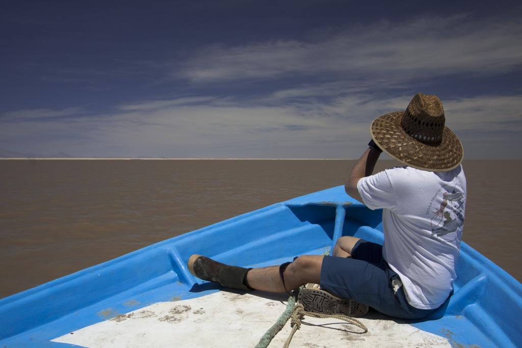 Dr. Ignacio Vilchis sits on the bow of a panga and scans the shoreline with binoculars in search of beachcast marine mammal.