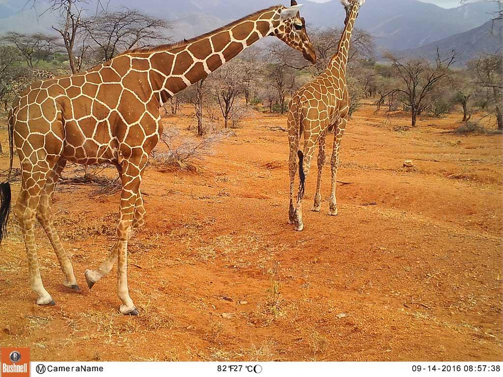 Wildwatch Kenya is a great project to help with!
