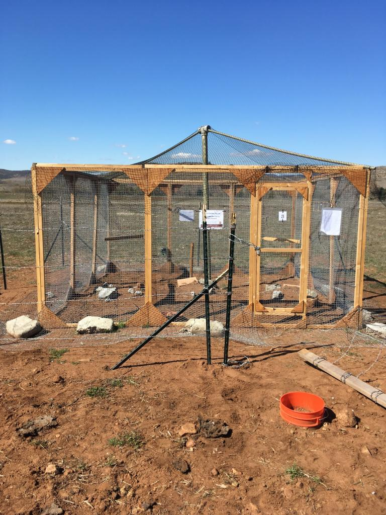 A hacking cage (a field release enclosure) used to acclimate translocated burrowing owls to their new home at a conservation area in San Diego County.