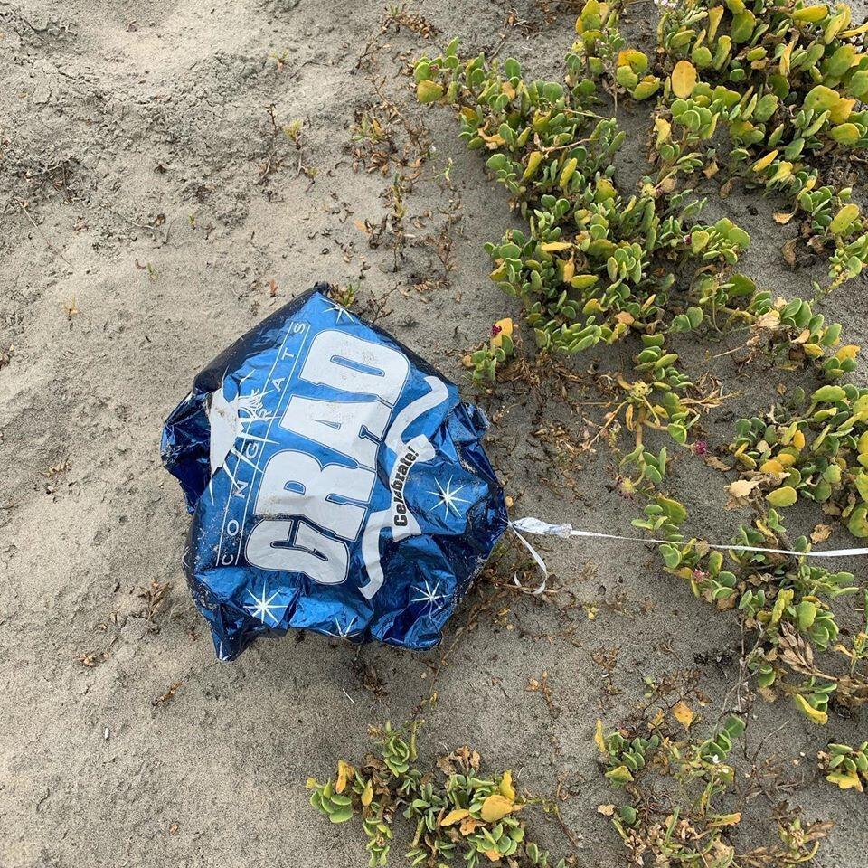 A recent graduation balloon entangled in California native Red Sand Verbena. (Photo: Rachel Vasseur, courtesy of Naval Base Coronado)
