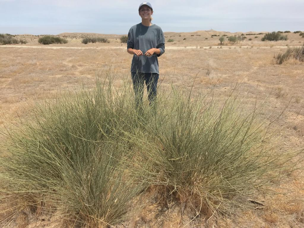 Myself, with one of the study shrubs that was clipped a previous year.