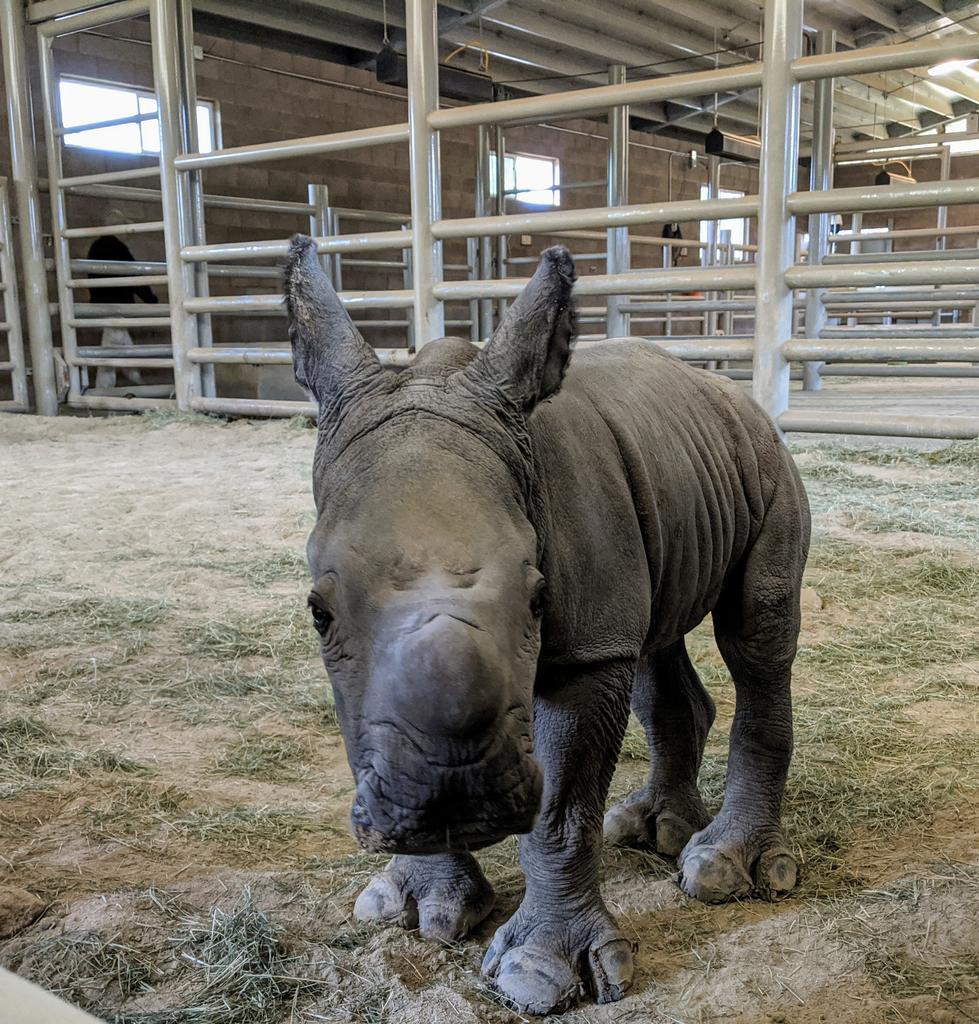 Amani's calf Future.