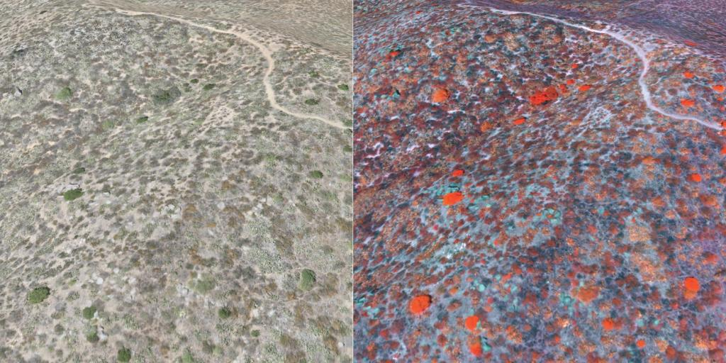 A 3D comparison section of the Reserve mapped using visual RGB (LEFT) and the chlorophyll content of the vegetation which is greatest when the plants are colored red (RIGHT)..