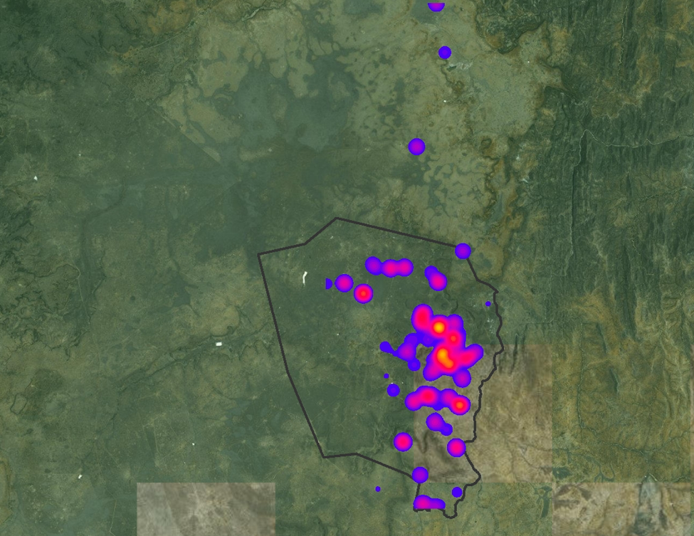 This heat map was created using data collected from the Twiga Walinzi based on observations of giraffe during their photo monitoring patrols within Loisaba Conservancy (conservancy boundary shown in grey). Everytime they come across a giraffe its coordinates are recorded. Based on those sightings, this heat map can show they areas where our team is seeing the highest occurrences of giraffe.