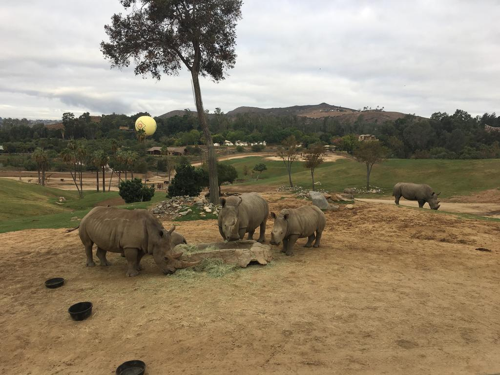 How might diets fed in human care interact with microbes to affect fertility in rhinoceros? Photo: Candace Williams