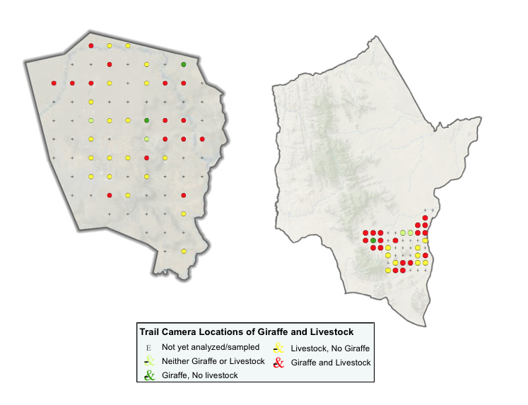 Trail camera locations showing where livestock and giraffe images were classified on Loisaba (left) and Namunyak (right) Conservancies.