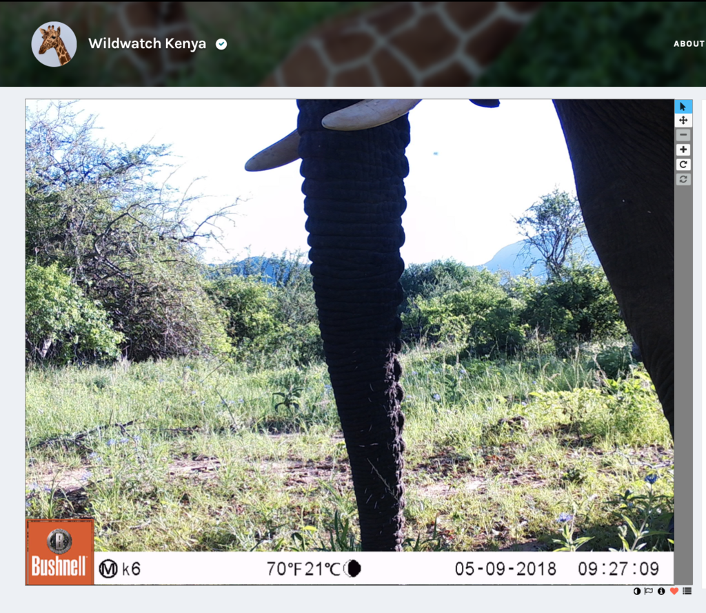 Yup, elephants check out the camera sites frequently.