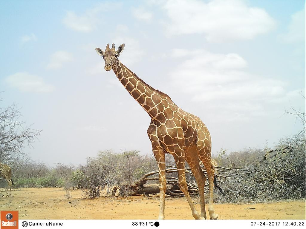 One of the many amazing camera trap images I got to review!