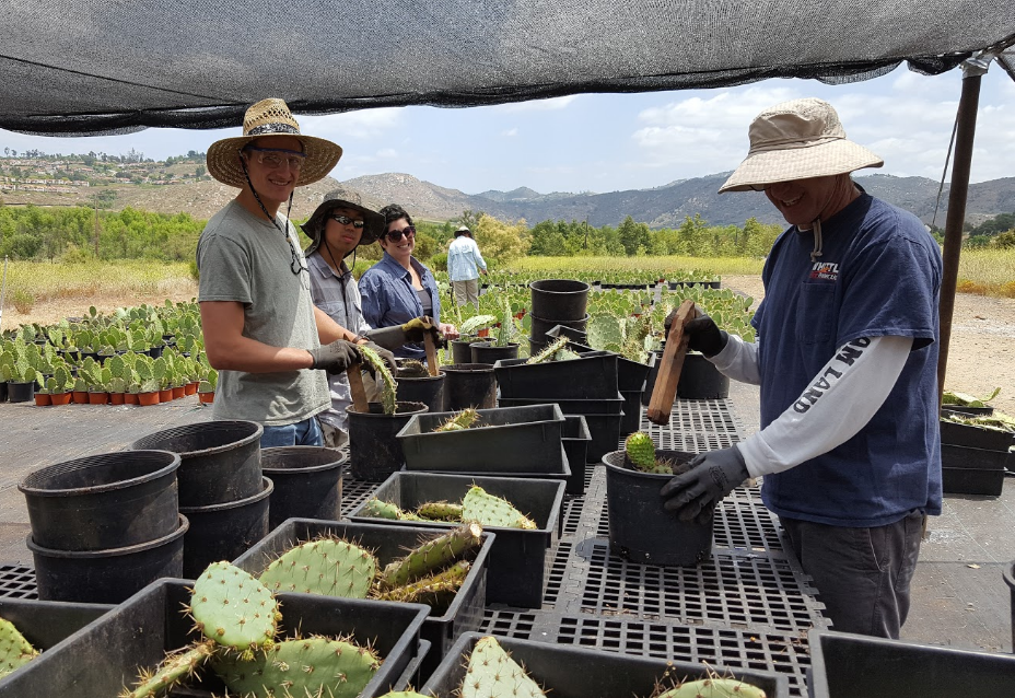 Teachers from Challenger Middle School helping propagate 4,000 cactus plants in our cactus nursery Photo by Jodi Takei-Peterie.