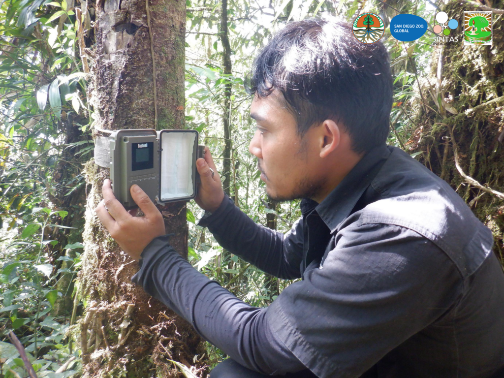 Field cameras are installed in the forest.