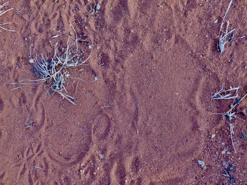 Nteekew and her mother's Nandugu tracks in the sand.