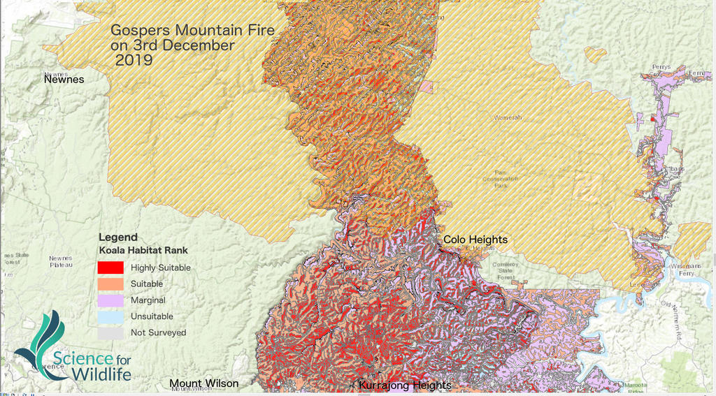 The map released by Science for Wildlife showing the effects on koala habitat by the Gospers Mountain fire. The red and orange areas are classified as highly suitable and suitable for koalas. Picture: Science for Wildlife.
