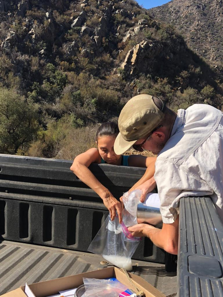 Tobin Weatherson and Baja volunteer Liliana secure tissue for genetic sampling in silica.